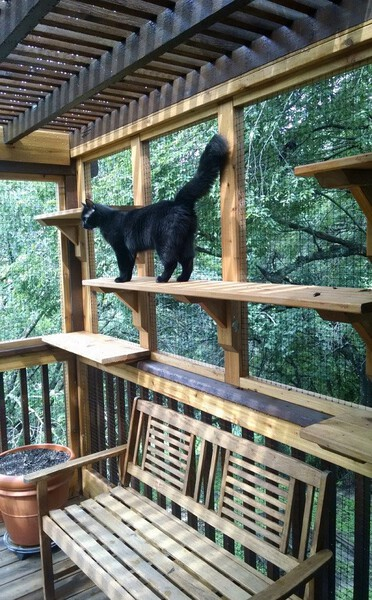 Cat Patio Ideas Your Cat Will Love! 1